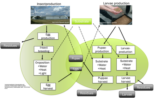 Schematic representation of the Hermetia production process